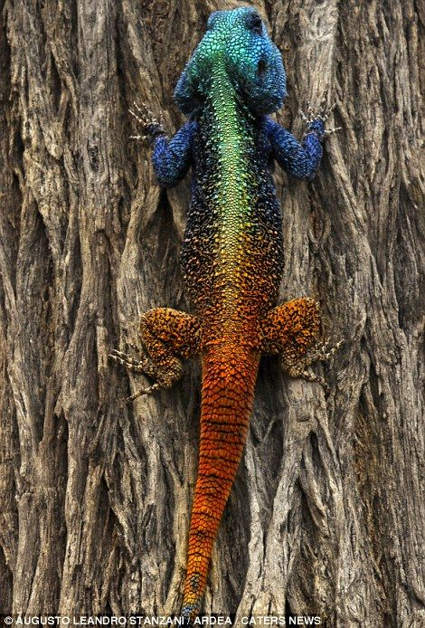 Yiral Colourful Creatures 3
