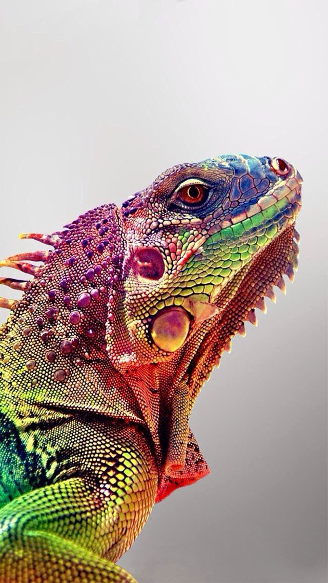11 Colorful Animals th...