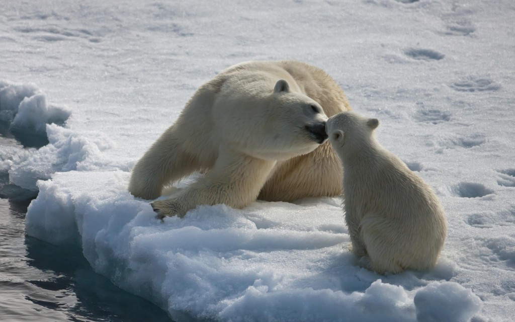 mommy_polar_bear_kissing_baby_polar_baby