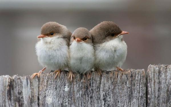 Angry birds Yiral hehe