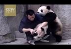 playful-panda