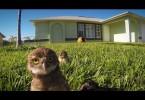 owl_chicks_dance_off