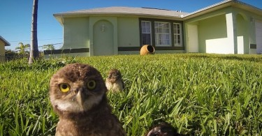 owl_chicks_dance_off