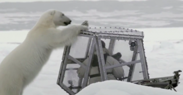 Polar Bear Tries To Eat BBC Cameraman