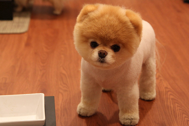 Puppy Breeds That Look Like Teddy Bears