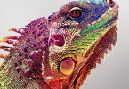 Yiral Colourful Creatures 4AB