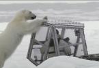 Polar Bear Tries To Eat BBC Cameraman
